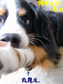 手、放してよ~!