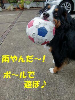 雨やんだからボール!