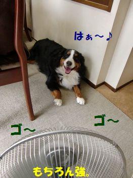 扇風機はいいね~!