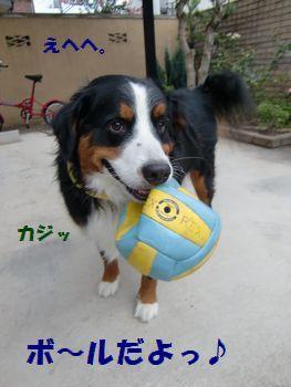 さぁ~!ボールで遊ぶよ~!!