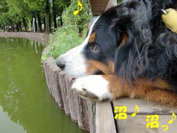 ひと休みしながらの沼観察♪