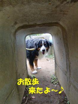 おっさんぽだよ~!トンネルだよ~!