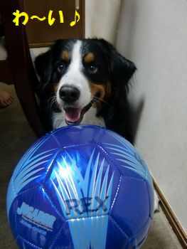 青いボール!!
