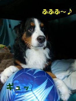 僕の青いボール♪