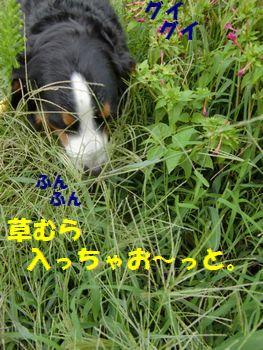 草むらは楽しいんだよ~!