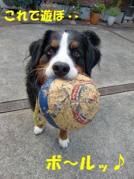 お庭といったらボール~!