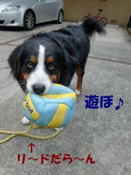 ボールで遊ぶ方が好きなんだも~ん♪
