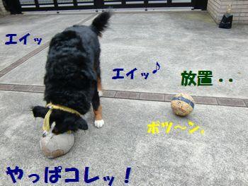 このボールも離れがたいの・・・。