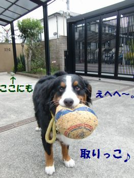 ボール~♪これも好き~♪