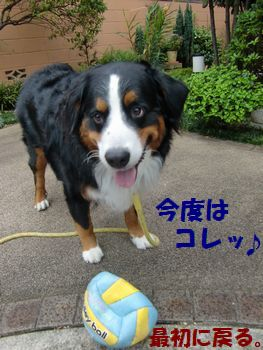 これこれこのボール~!!