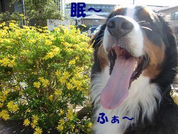 早く行こうよ~!お花はいいよ~!