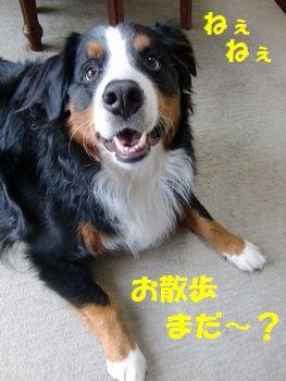 お散歩待ちっ!!