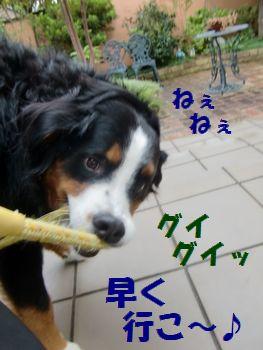 ねぇ~!早くお散歩!