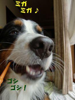 歯磨きみ~がみが~!