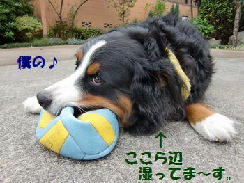 ボール遊びで我慢だもん・・。