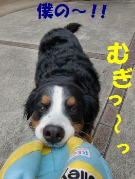 ぼっくのボール~!!