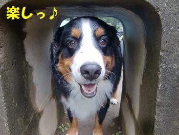 たのし~!トンネル最高♪