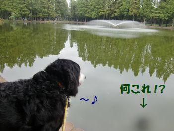 い~噴水♪