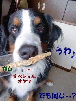 す、すぺしゃる~!?