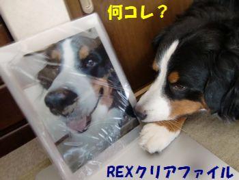 REXクリアファイル~!?