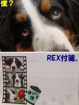 REXふせん~!?って僕??