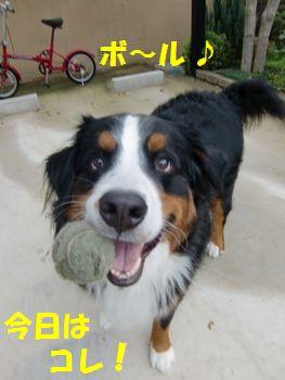 今日のボールはこれだよ~!!