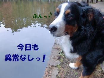 沼って素敵~!