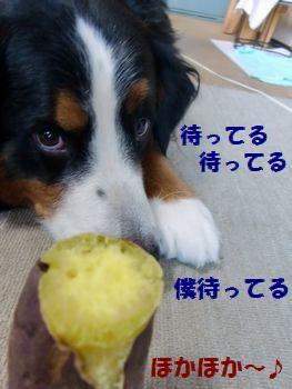 僕のお芋・・・。