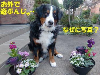 なんでお花と撮ってんの?