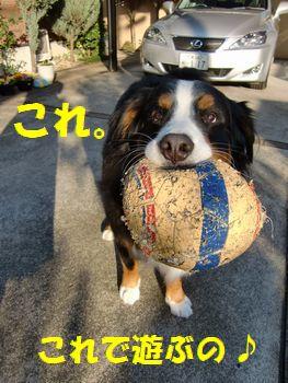 ボールで遊ぼうよ~。これ!!