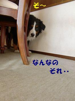 も~!なにあれ!