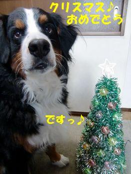 おめでとう~!クリスマス~♪