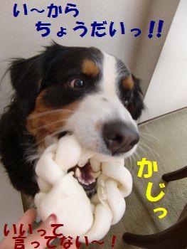 はやくちょ~だいっ!!も~!!