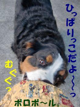 ボロでもい~の!!