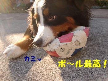 ボールがやっぱりいいよね~♪
