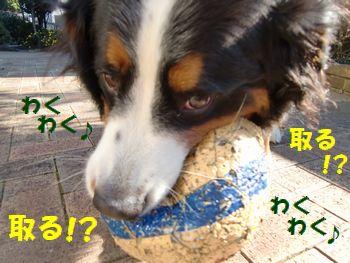 ど~する!?取りっこ!?取りっこ~!?