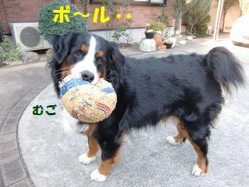 涼しいとボール遊びだよね!やっぱ。