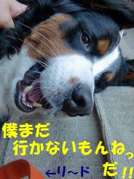 いいの~!まだなの~!!