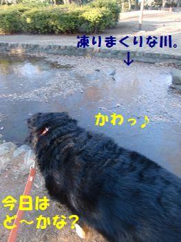 今日の川はど~かなぁ~!