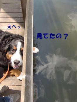 も~!見てたの~!?