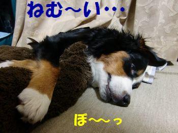 いま、眠いんですけど・・・