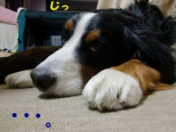 ・・・眠いの!