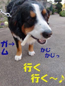 お散歩なら行くよ~!!