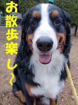 お散歩は楽しいね~♪甘えられるし~!