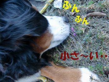 今、咲くの~!?