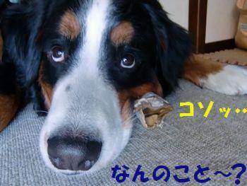 なんのこと~!?