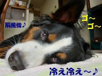 せんぷうきで冷え冷え~♪