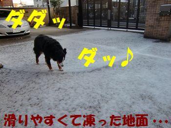 雪って楽しい~!!