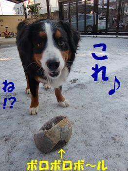 お庭と言えばボールでしょ~!?