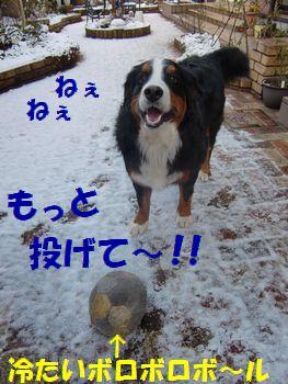 もっと投げて遊ぼうよ~!!